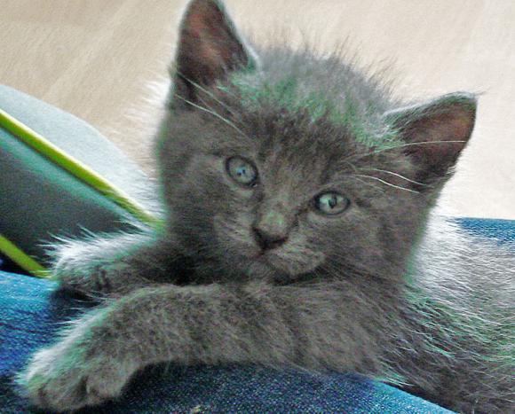 http://je-suis-un-morse.cowblog.fr/images/DSC04241.jpg