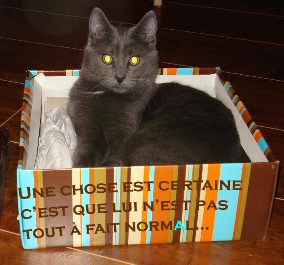 http://je-suis-un-morse.cowblog.fr/images/DSC04966.jpg