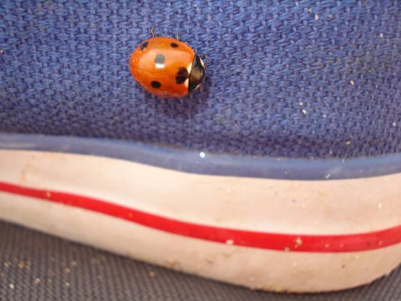 http://je-suis-un-morse.cowblog.fr/images/DSC06643.jpg